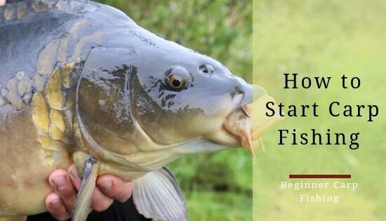 Carp fishing for beginners