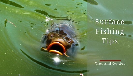 How to catch carp from the surface