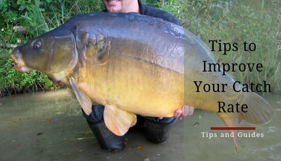 Tips to improve carp catch rate